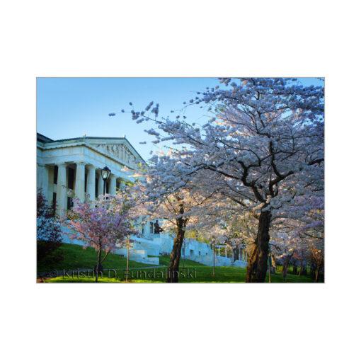 Fundalinski - Cherry Blossoms, Buffalo History Museum