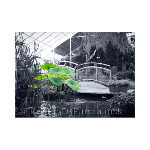 Fundalinski - Japanese Bridge, Buffalo Botanical Gardens